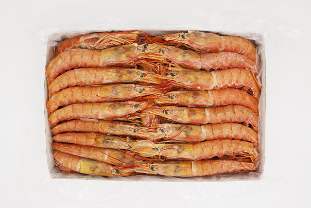 Argentina Red Shrimp